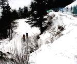 Kufri receives fresh snowfall