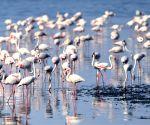 KUWAIT KUWAIT CITY NATURE BIRDS