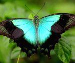 Gita Persada Butterfly Park