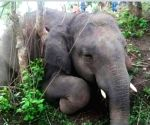 Lightning kills herd of 18 wild elephants in Assam (Ld)