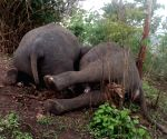 Free Photo: Lightning kills a herd of 18 wild elephants in Assam.