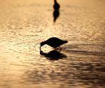 FINLAND-LIMINKA BAY-BIRD HABITAT