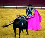 PORTUGAL LISBON BULLFIGHTING