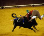 A traditional Portuguese bullfight