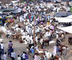 Eid al-Adha makeshift livestock market