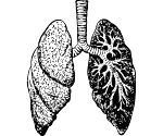 Most lungs recover well in 3 months after Covid: Study