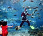 PHILIPPINES MANILA OCEAN PARK UNDERWATER SANTA CLAUS