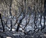 IRAN MARIVAN FOREST WILDFIRE