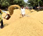 Nearly 46 lakh tonne paddy procured in Punjab