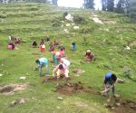 UP plantation drive with aim on immunity-building