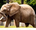 Elephant a gentleman, will not allow it to be troubled: SC