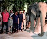 File Photo: Missing elephant found near Delhi police headquarter