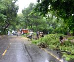 Fallen trees block roads
