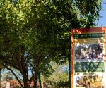 Museum of Trees curator wants Central Vista landscape with sacred trees