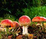 Free Photo: Mushroom