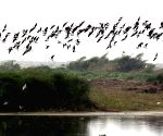 Mysterious suicide of birds in Assam village portrayed in poems