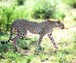 KENYA SAMBURU NATIONAL RESERVE