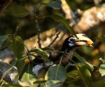 Shrinking forests concern for seed dispersal by birds: Study