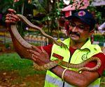 Rat Snake rescued