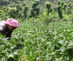 Free photo : Natural farming in Himachal brings gains, worth emulating