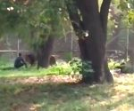 Youth jumps in lion's enclosure at Delhi zoo