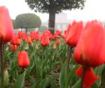 Mughal Gardens open for public from Feb 6, display exotic flora