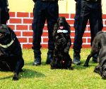 : New Delhi : National Security Guard (NSG)commandos poses with their dogs   on the occasion of 37th Foundation Day in Manesar,