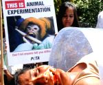 PETA demonstration