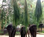 On World Elephant Day, B'luru Zoo accepts mahouts' contribution