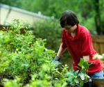 Online sales hint home-gardening blooms in lockdown