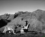 Free Photo: Over 70% snow leopard habitat remains unexplored: WWF