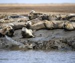 CHINA LIAONING PANJIN SPOTTED SEALS