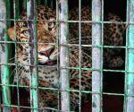 Panther injures 3 in Jaipur district