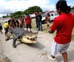 Pasay City: 21-foot robot crocodile