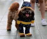 THE PHILIPPINES-PASAY CITY-LUCKY PAWS PARADE