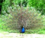 File Photos: Peacock