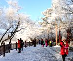 CHINA HEILONGJIANG WINTER SCENERY