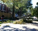 Free Photo:A man walks past a fallen tree in New Orleans, Louisiana