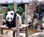 MALAYSIA-KUALA LUMPUR-GIANT PANDA