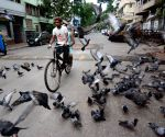 Pigeons are playing the deserted road during the lockdown on Coronavirus pandemic in Kolkata.