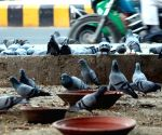 Pigeons at Connaught Place
