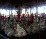 Iraq reports bird flu outbreak