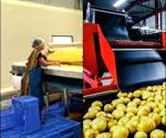 Food processing becomes preferred sector in UP