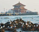 CHINA-SHANDONG-QINGDAO-SEAGULLS