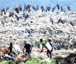 Rag-pickers at a dump-yard