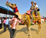 Rajasthan registered -71.50% YoY dip in tourist numbers in 2020