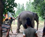 Tusker 'brothers' go on rampage in Pilibhit village
