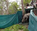 Free Photo: Rescued 3 rhino calves successfully released to Manas Tiger Reserve in Assam