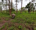 3 rescued rhino calves released into Assam tiger reserve