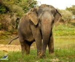 Bollywood celebrities want stricter laws after brutal death of pregnant elephant in Kerala